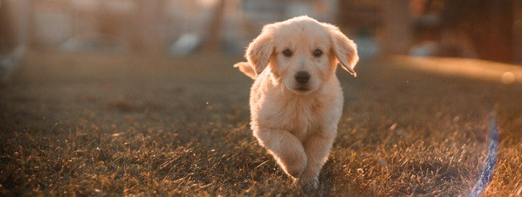 örökbefogadott kutya