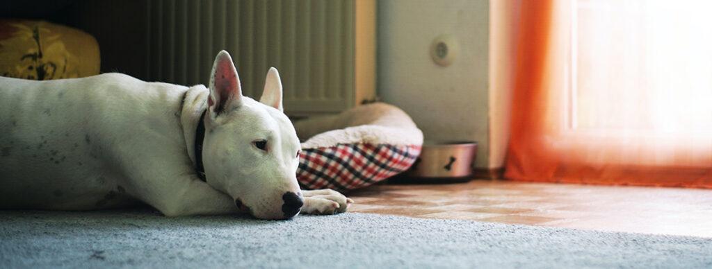 A kutyus szeparációs szorongással.