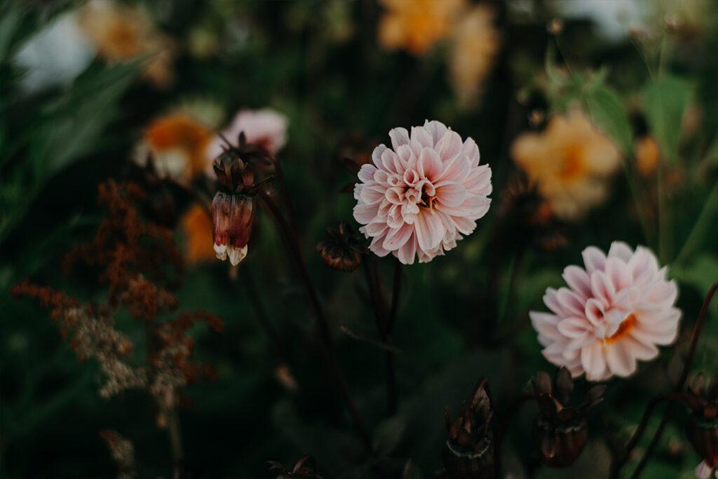 növények a kertben