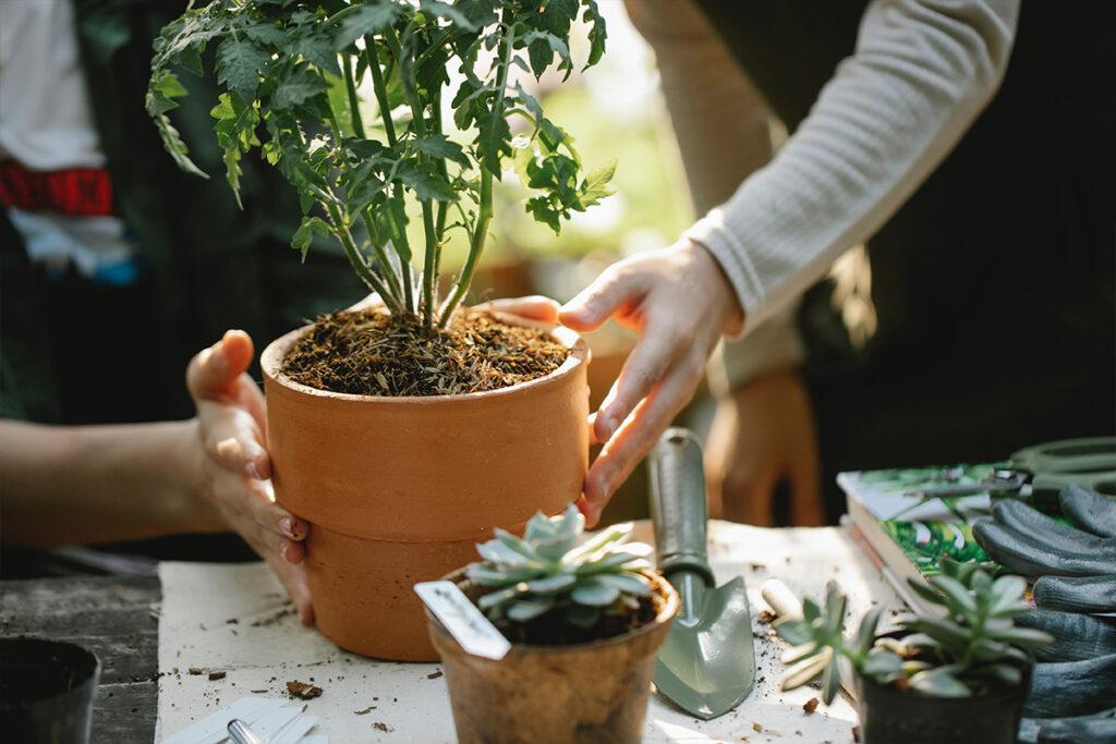 ültetés ősszel